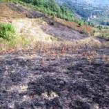 Türkeli'de 10 dönümlük arazi zarar gördü