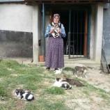 40 Kediyle Birlikte Yaşıyor
