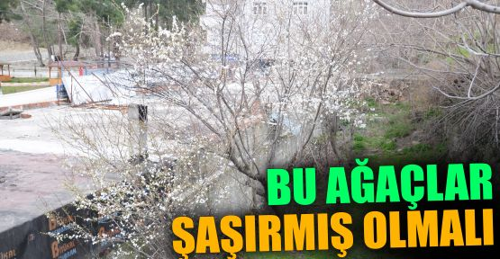 bu_agaclar_sasirmis_olmali_h12024