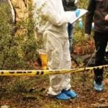 Son Dakika : Boyabat'ta Ormanlık Alanda Erkek Cesedi Bulundu..
