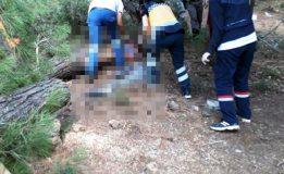 Kestiği Ağacın Altında Kalan İşçi Ağır Yaralandı…