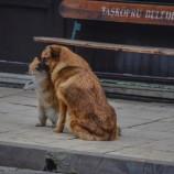 Kedi ve Köpeğin Dostluğu, Kıskananlar Çatlasın….