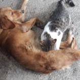 Sokak Köpeğinin Kediyi Emzirmesi Şaşırttı….