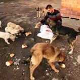 30 Tane Sokak Köpeğine Bakıyor, Evinizdeki Bayat Ekmekleri Atmayın, Hayvan Dostu Barış Arıcıyı Arayın..