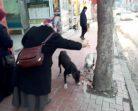 Boyabatlı Emekli Teyze Maaşı İle Sokak Hayvanlarını Besliyor….