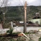 Durağanda Fırtına Ağaç Devirdi…