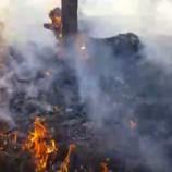Kargıda Orman Yangını, Ciğerlerimiz Yanıyor…