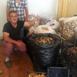 Sinop'tan dünyaya ihraç ediliyor, günde 7 bin lira kazanan bile var…