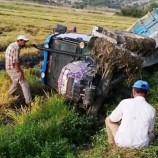 Durağanda Çeltik Yüklü Traktör Devrildi…