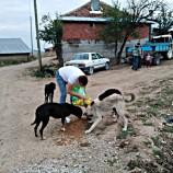Boyabat'ta 30 Tane Köpeği Ölüme Kim Terk Etti? …