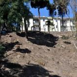 STK' lardan Ağaç Katliamına Çok Sert Tepki…