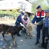 Jandarmadan Hayvan Hırsızlarına Suç Üstü, Az Kalsın Satıyorlardı…
