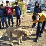 Boyabat'ta Gençler Sokak Hayvanları İçin Meydana İndi….