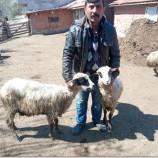 Boyabat Çattepe Köyündeki Karantina, Koyunları Açlıktan Öldürecek mi?…