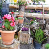 Çöp'ten Gelen, Çiçek Gibi Bahçe…