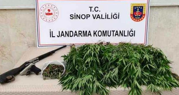 Sinop'ta Kenevir Operasyonu 2 Gözaltı…