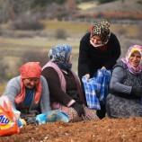 """-AK Parti """"EMEKCİ"""" Kadınları Unutmadı…"""