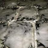 Kaçak Avcılığa geçit yok,4 Buçuk Ton Balığa El Konuldu..