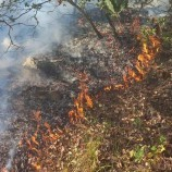 Durağanda Orman Yangını, Piknik Ateşi Yakanı İhbar Edin …177-155-112-156-